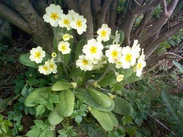 nature01464 Jakie rośliny jako pierwsze budzą się nawiosnę?