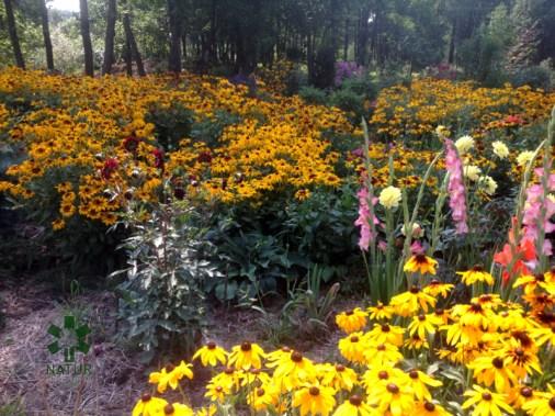 ogrc3b3d-naturalny-w-sumienie_00008 Ogród w lesie. Sumin