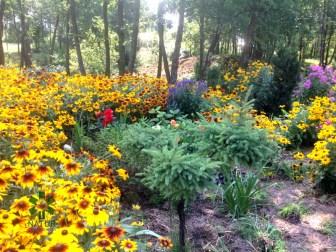 ogrc3b3d-naturalny-w-sumienie_00010 Ogród w lesie. Sumin