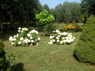 ogrc3b3d-naturalny-w-sumienie_00015 Ogród w lesie. Sumin