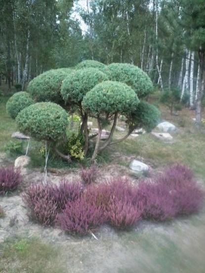 zdjc499cie0053 Ogród wlesie - Sumin