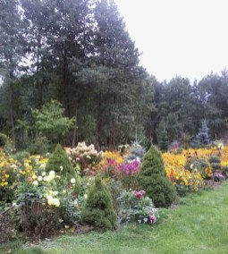 zdjc499cie0162 Ogród wlesie - Sumin