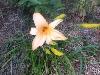 img_1119 Pierwsze kwiaty wiosny.