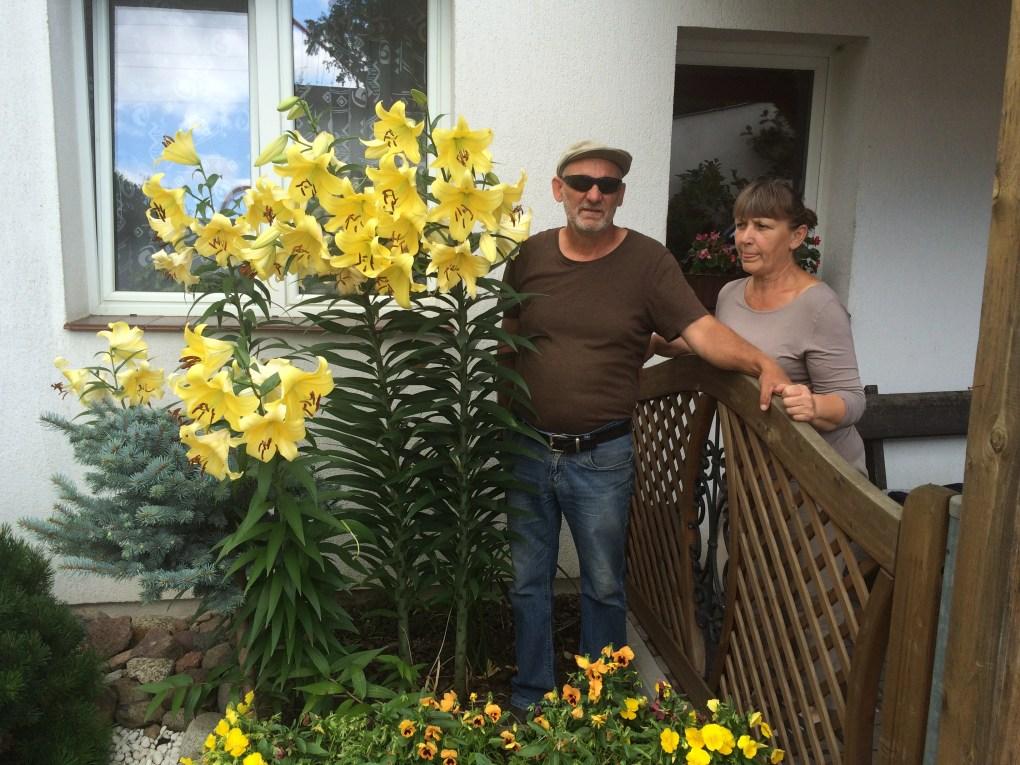 img_6731 Lilie ogrodowe