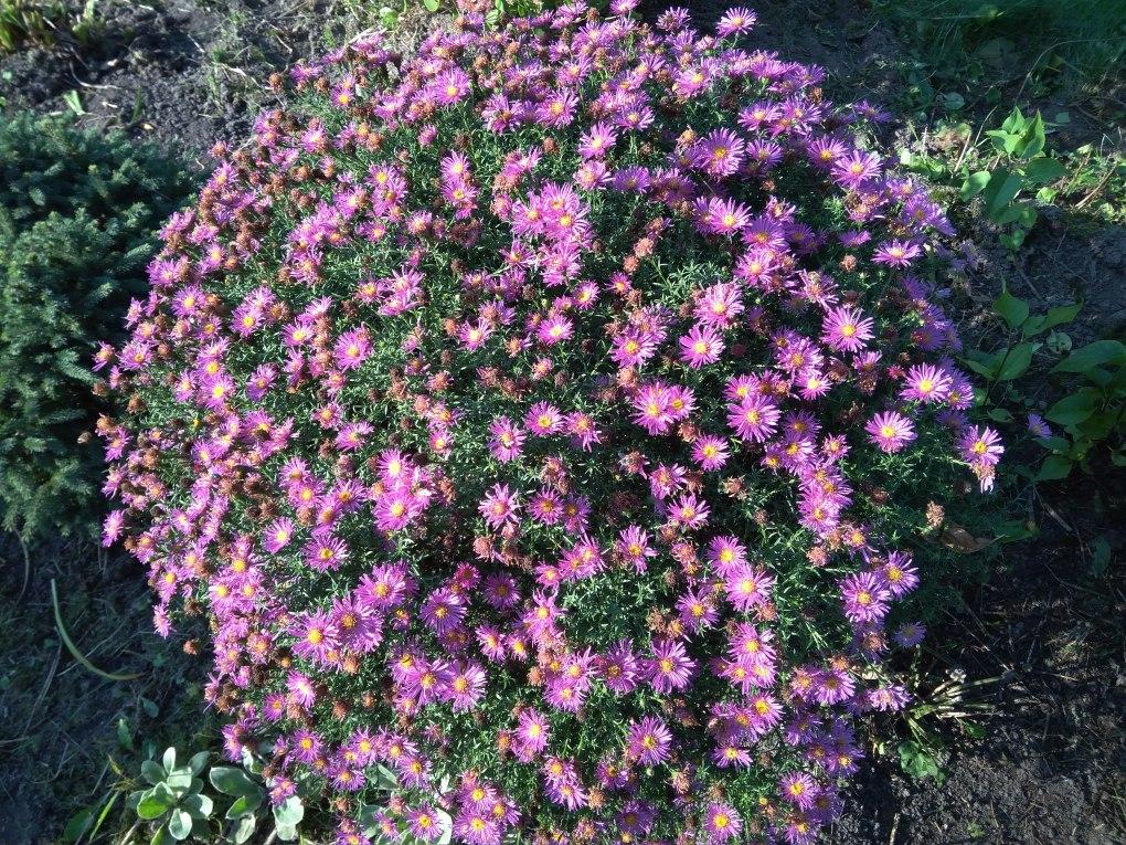 img_20171001_152955 Te kwiaty kwitną jesienią