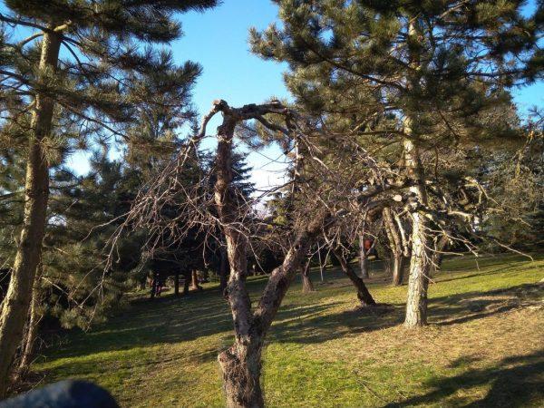 Zima to dobry czas, żeby przyciąć drzewa i krzewy w naszych ogrodach i na działkach