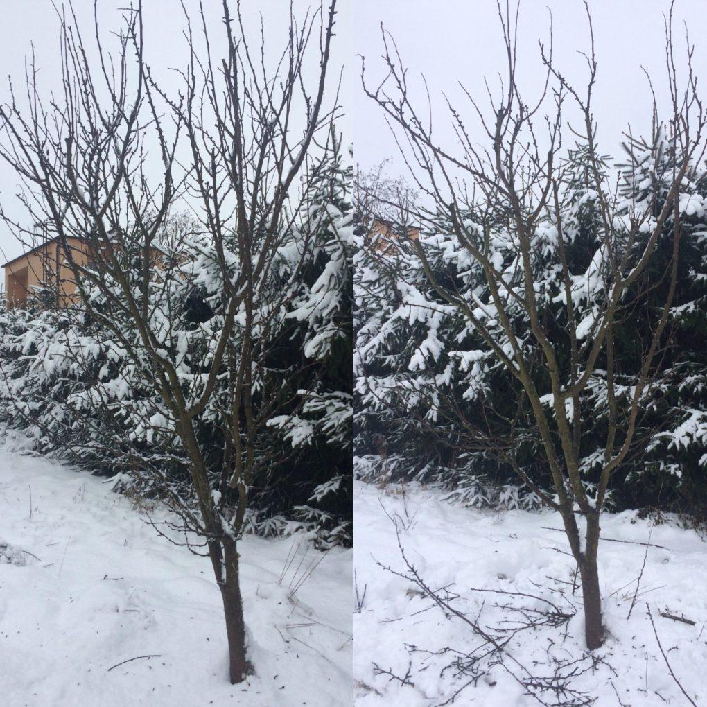 7500970d-facb-44e8-a561-a703018e96aa Cięcie drzew owocowych