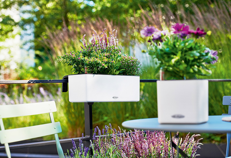 Rośliny W Donicach Również W Ogrodzie Zielone Pogotowie Blog