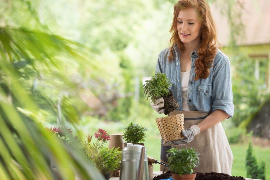 kobierta-sadzi Rośliny wdonicach również wogrodzie