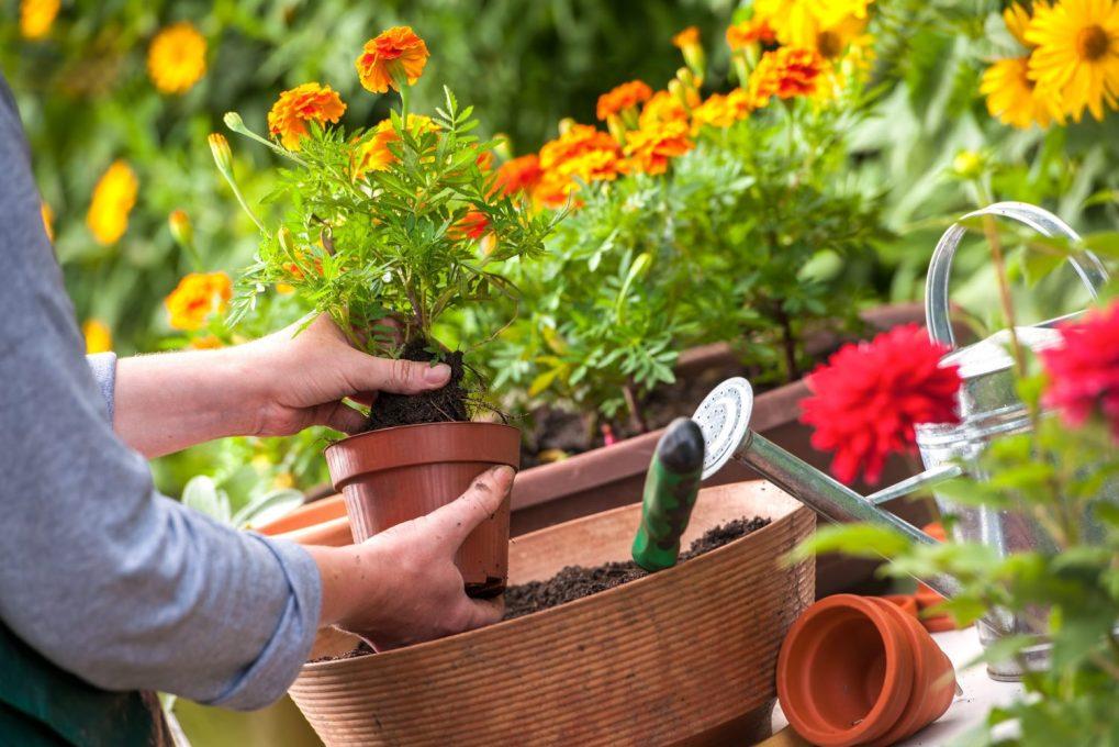 sadzenie-w-doniachach Rośliny wdonicach również wogrodzie