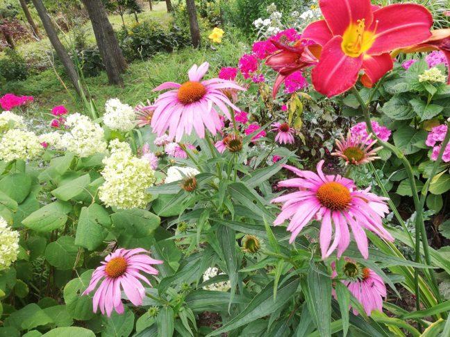 37609881_254347675295822_747823736891113472_n Jak pozyskać nasiona kwiatów?
