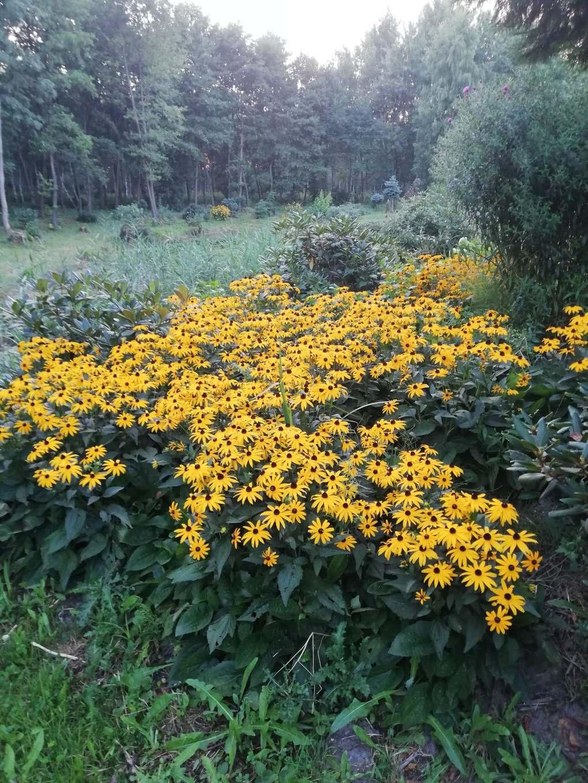 38470886_266638060733450_4853299648477003776_n Jak pozyskać nasiona kwiatów?