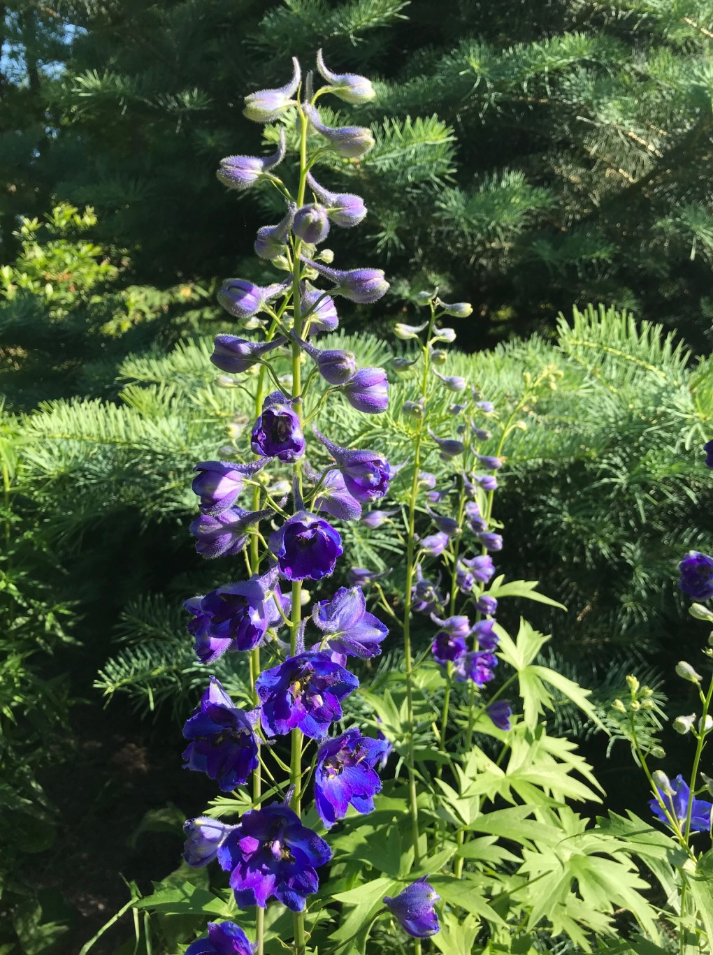 img_1432 Jak pozyskać nasiona kwiatów?