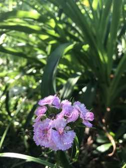 img_1478 Jak pozyskać nasiona kwiatów?