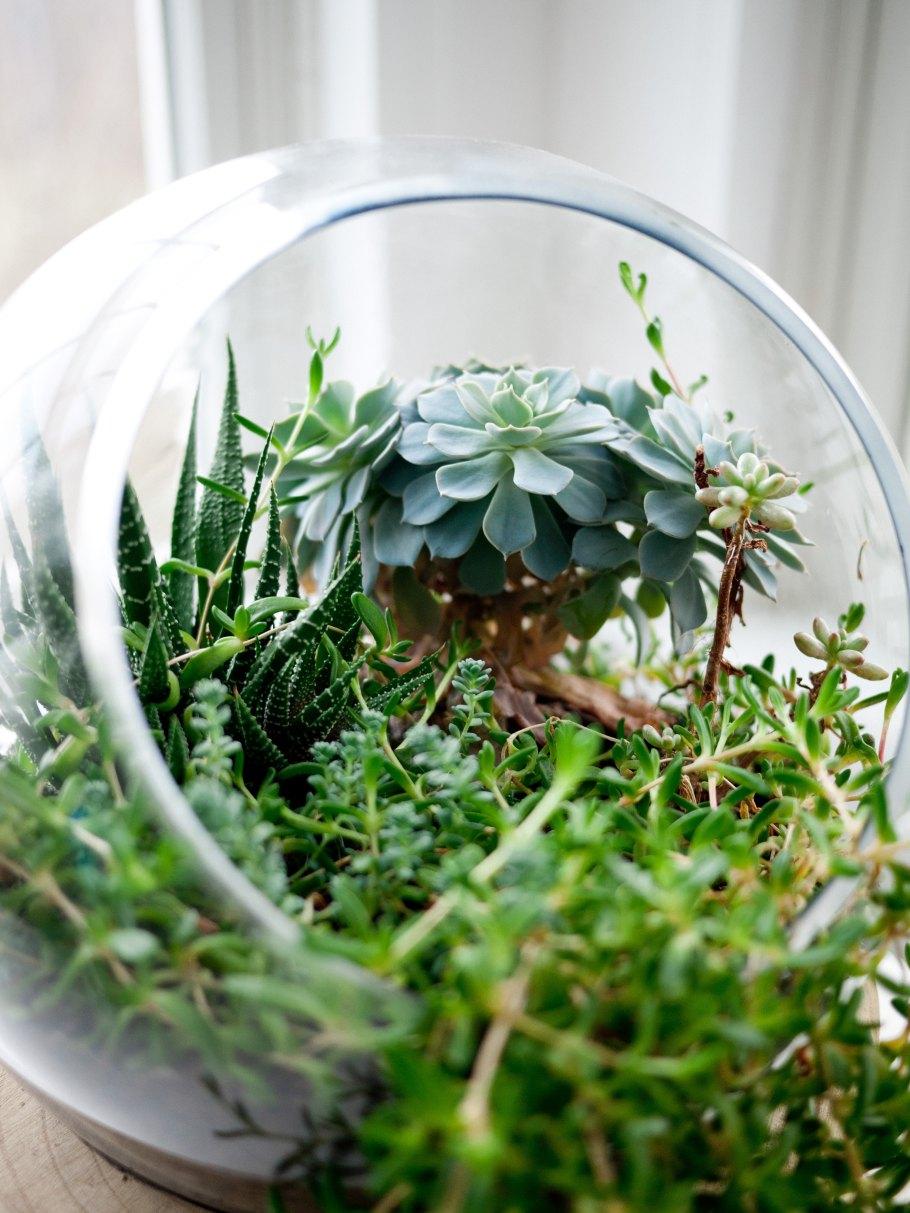zielen-w-sc582oju Miejski busz - renesans roślin we wnętrzach