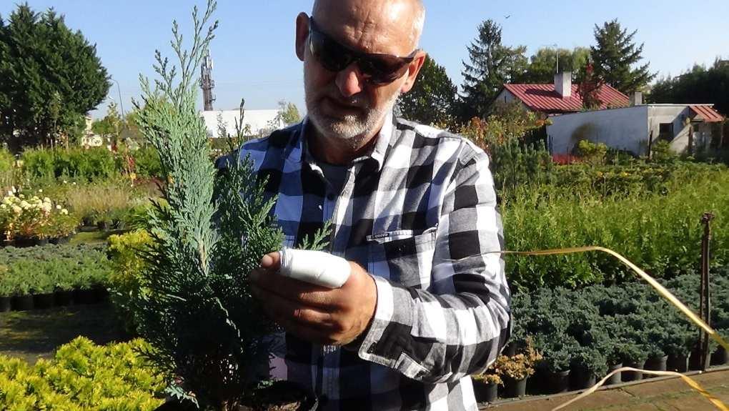 DSC02812 Te rośliny nadają się na żywopłoty