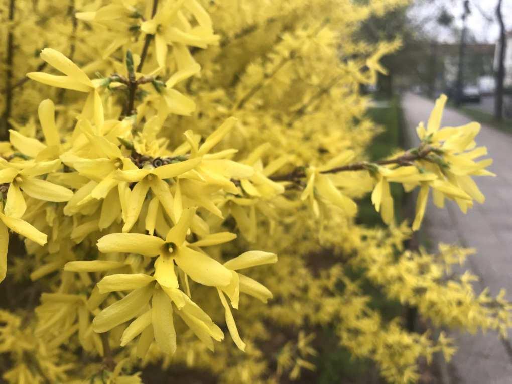 IMG_0158 Te rośliny nadają się na żywopłoty