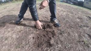 IMG_3304-300x169 Pędraki w trawniku. Jak się ich pozbyć?