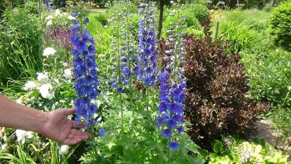 Planowanie ogrodu. Wybierz kwiaty