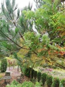 iglaki-suche-zolte-igly-225x300 Dlaczego rośliny żółkną, aigły spadają naziemię? – Zielone Porady 28