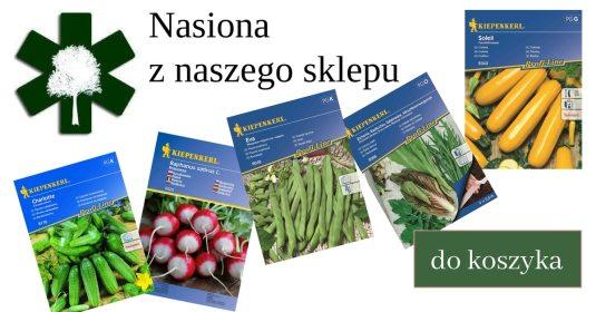 nasiona_sklep-1024x538 Zakładanie warzywnika. Jak sadzić ekologicznie