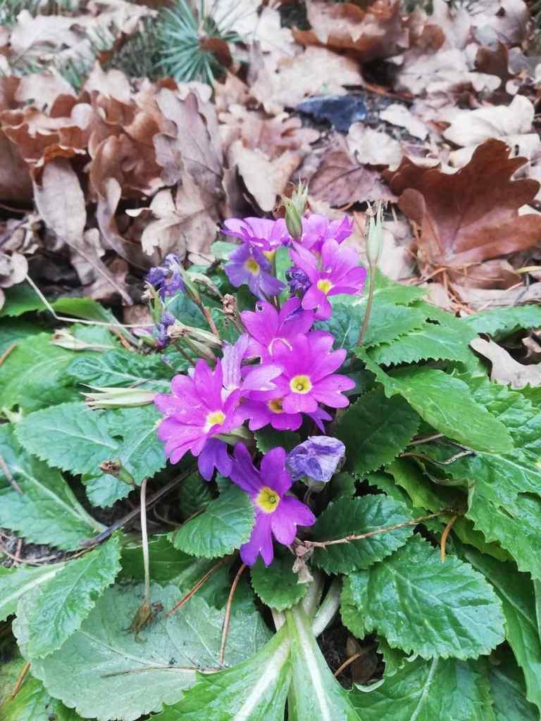 ziema_styczen-2020-1-768x1024 Brak zimy - zagrożenia dla roślin - Zielone Porady 33