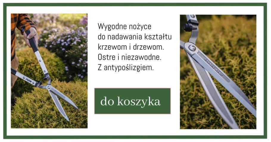 Nożyce-do-przycinania-1-1024x538 Te rośliny nadają się nażywopłoty