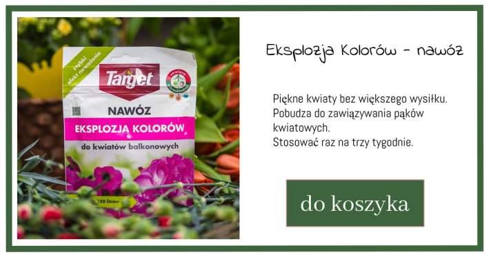 eksplozja-kolorw-1024x538 Jak dbać o rośliny kwitnące w donicach