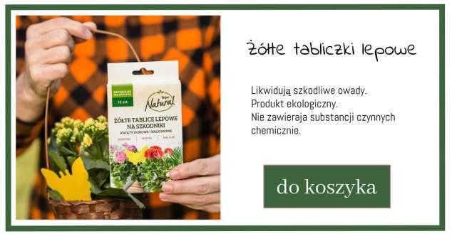 tablice-lepowe-1024x538 Te zabiegi uchronią Twoje rośliny przed chorobami i szkodnikami