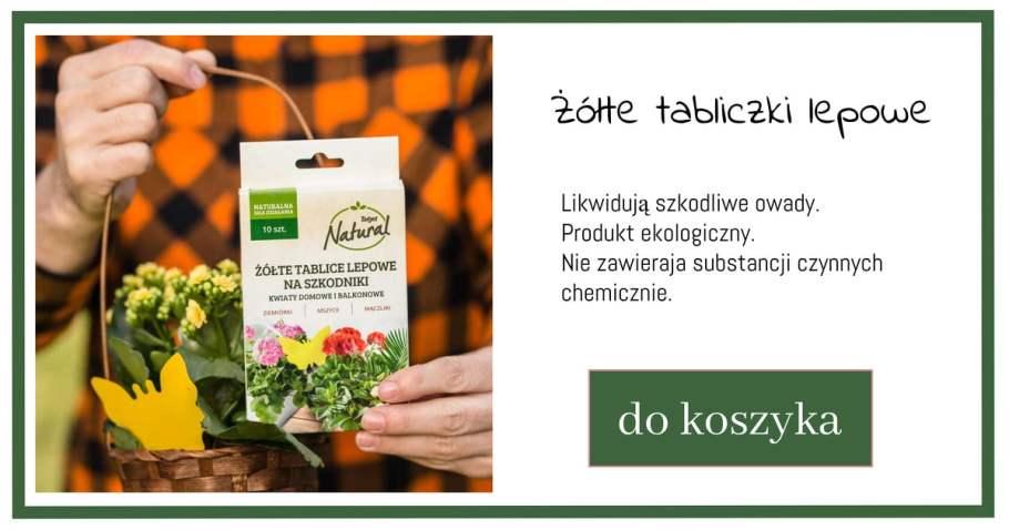 tablice-lepowe-1024x538 Jak dbać orośliny kwitnące wdonicach