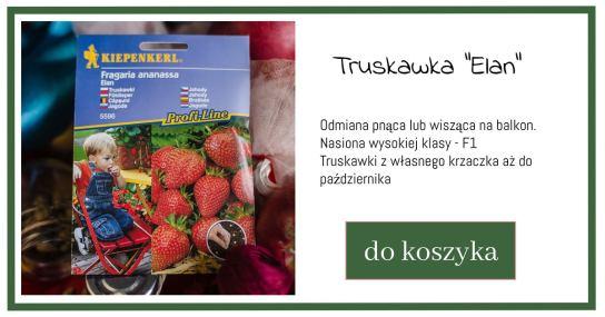 truskawki-nasiona-zielone-pogotowie-1024x538 Co najszybciej wysiać na rozsadę?
