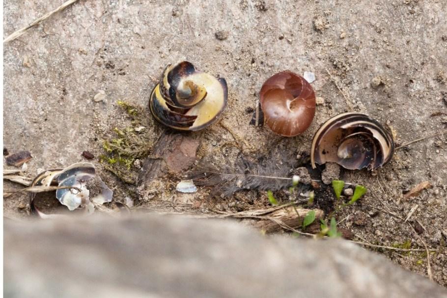 kuznia-1 Sposoby na ślimaki