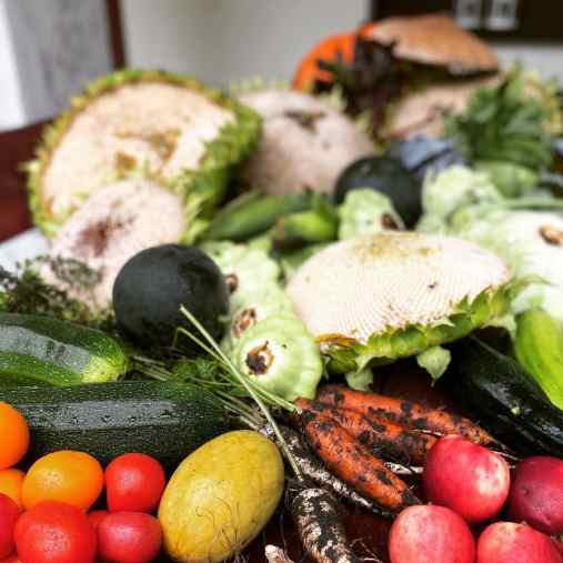 warzywa_przechowywanie-1024x1024 Dobre i złe sąsiedztwo w ogrodzie warzywnym. Zielone Porady 6