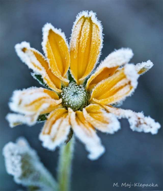 maleIMG_8232c-1-1-876x1024 Zabezpieczanie roślin zimą – Zielone Porady 48