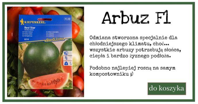 arbuz-3-1024x538 Siej i uprawiaj arbuzy
