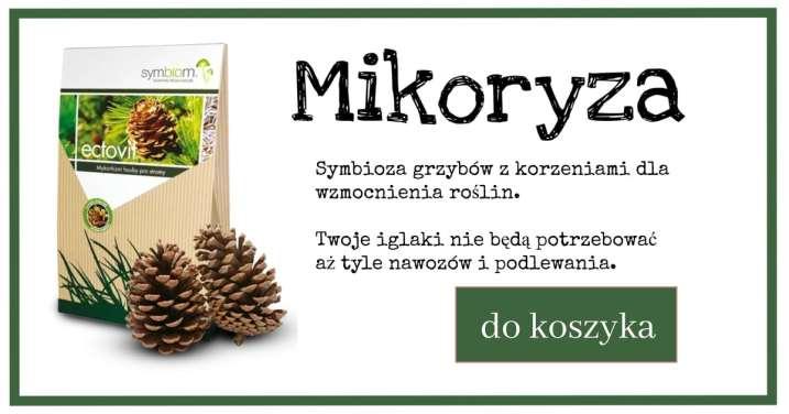 mikoryza_iglak-1024x538 Mikoryza - Opowieści z rancza 4