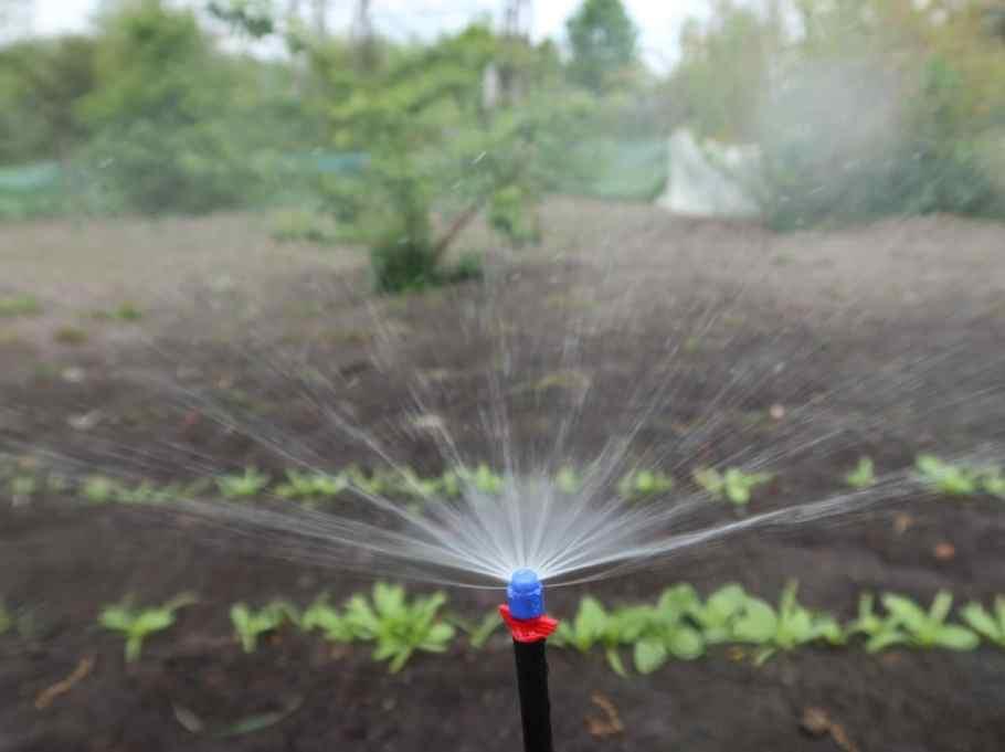 podlewanie w ogrodzie