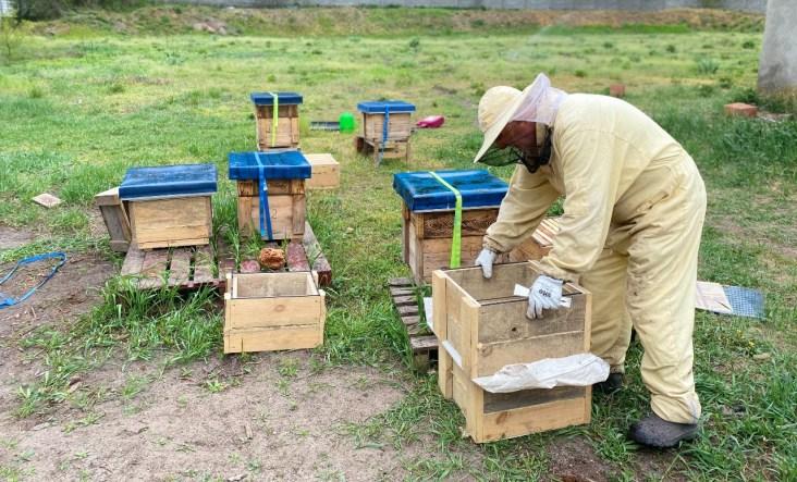 pasieka-1024x620 Pszczoły w mieście - Zielone Porady 56