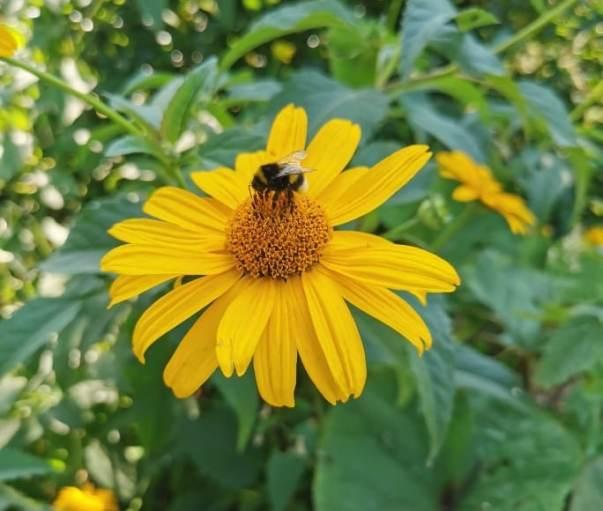 pszczola-1 Pszczoły moje koleżanki - Opowieści z rancza 3