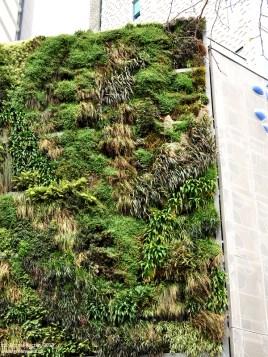 green_walls_zielone_sciany_ogrody_werykalne_architektura_krajobrazu_krakow_zielen_w_mieszkaniu24