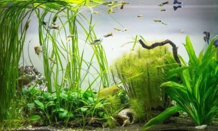 Kräftige Wasserpflanzen