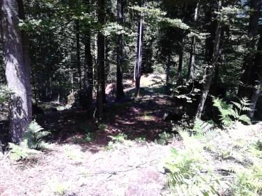 začetek gre po grebenu pot je zrita od gozdarjev