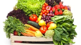 Nutrients that are absolutely essential for our bodies? survival 1