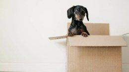 Tips To Relocate To a New Home 1