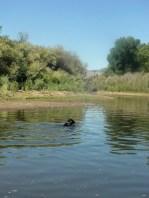 Ziggy Swimming