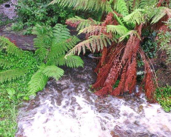 Dandenong Ranges national park. Photo: Amy Robertson