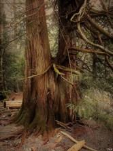 16-12-25-lake-tree-y-sunscreen-z