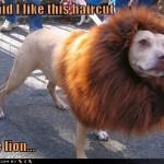 Anjing paling garang didunia