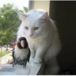 Kisah, persahabatan kucing dan burung.