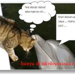 Bila kucing dan Ikan Dolphin berinteraksi,
